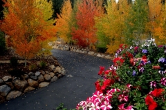 101018 Driveway Aspens Flowers